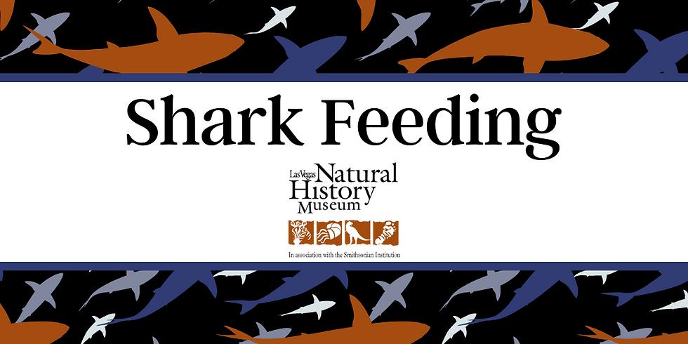 Shark Feeding - Saturday