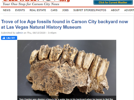 Trove of Ice Age fossils found in Carson City backyard now at Las Vegas Natural History Museum