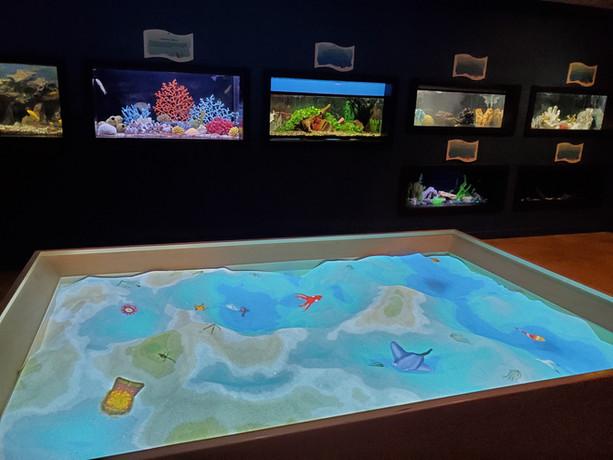 Marine Life Gallery