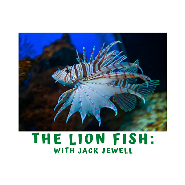 Marine Week- The Lion Fish with Jack Jewell