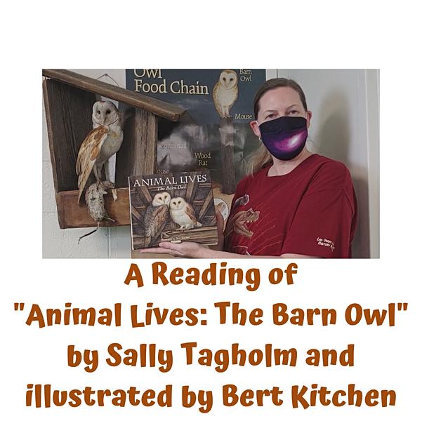 _Animal Lives- The Barn Owl_ by Sally Ta