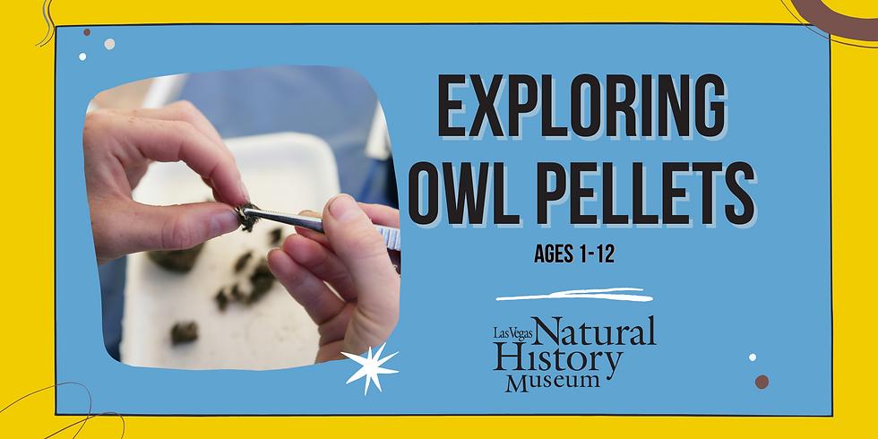 Exploring Owl Pellets