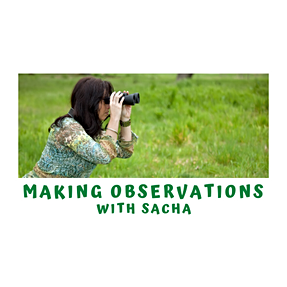 Making Observations with Sacha