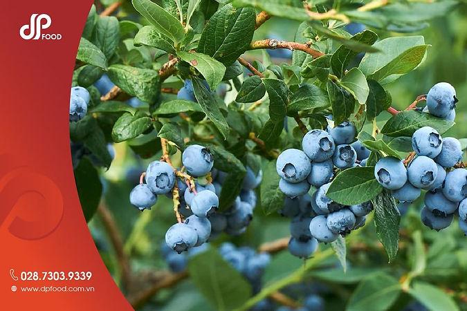 Qua-blueberry