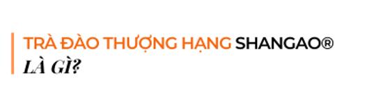 Tra-dao-thuong-hang-shangao-la-gi