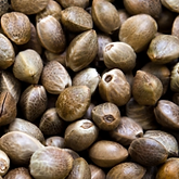 cannabis_seeds.png