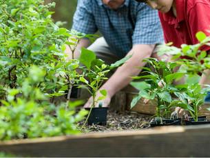 """Smart Gardening – """"Smart Home"""" für den Outdoorbereich"""