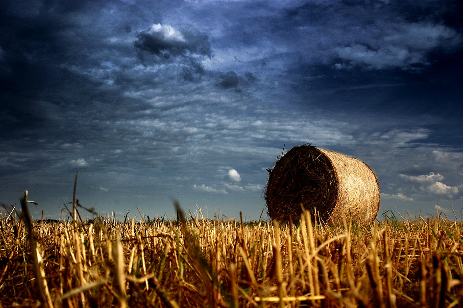 Croatia_Baranja_Belje_Agricultural field