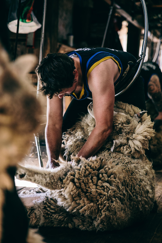 South East Shearing-25