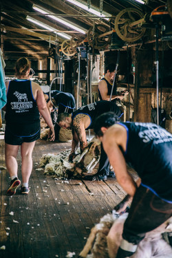 South East Shearing-33