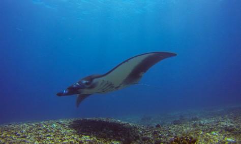 3 endroits pour découvrir les fonds marins en Asie!