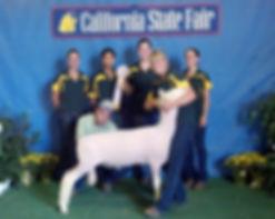 Fall Ram Lamb at Cal Poly
