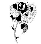 flora2 copie.jpg