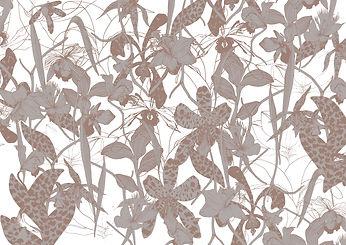 orchidea-cahier1.jpg