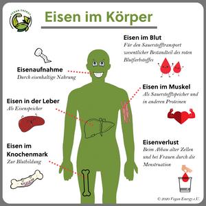 Beschreibung der Funktion von Eisen im menschlichen Körper