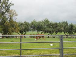 Rural Yolo County