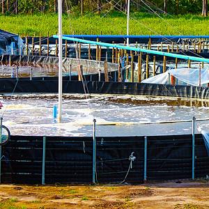 Maricultura de Camarões