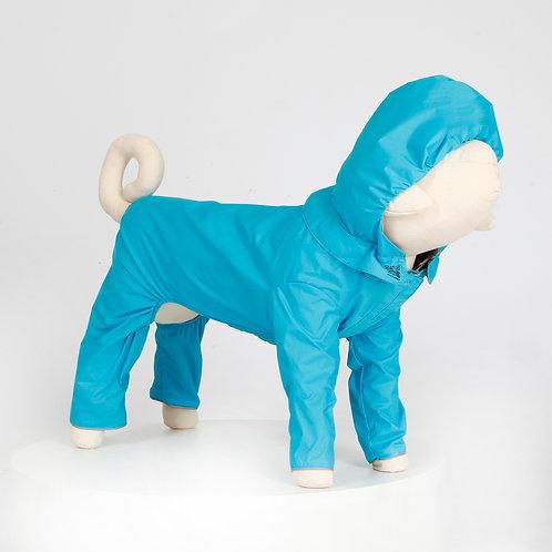 汪雨衣|柴犬