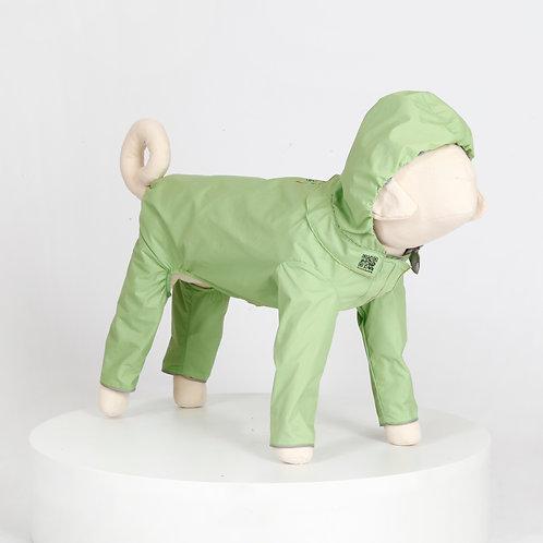 汪雨衣|狐狸犬