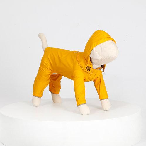 汪雨衣|約克夏