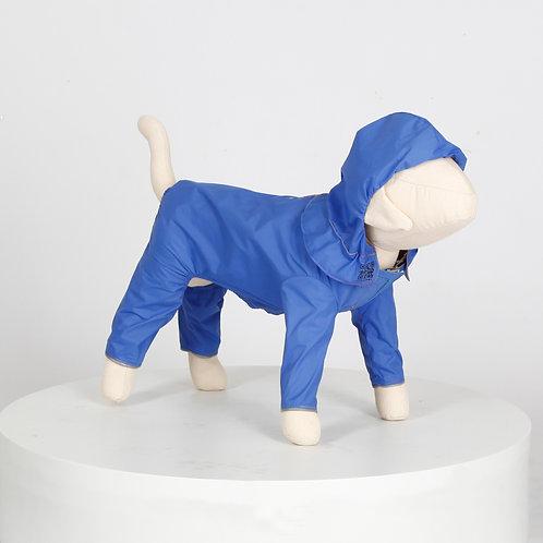 汪雨衣|吉娃娃