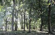 Forêt de Camoel