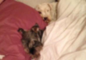 Hugo & Didi (dogs) sleeping in bed.