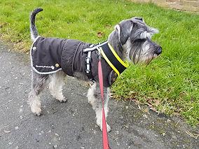 george(dog) on a walk.
