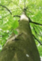 Blick zum Baum.JPG