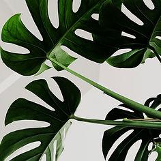 fitwel-plant.jpg