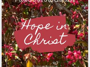Hope in Christ (Flowers in the Garden)