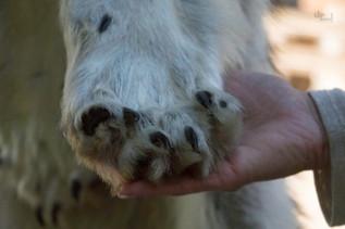 Alaska: Timberwolf