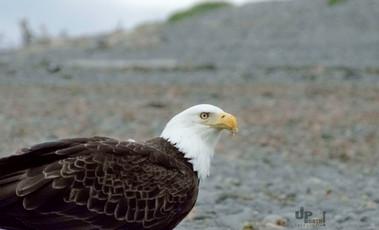 Alaska: Besuch am Strand