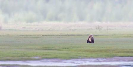 Alaska: Grizzlyliebe