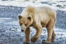 Alaska: Neugierig