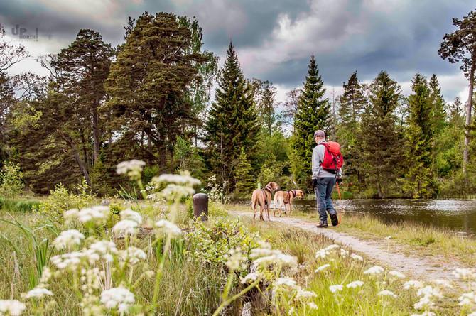 Reisen mit Hund: Schweden