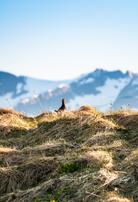 Norwegen: Moorhuhnjagd