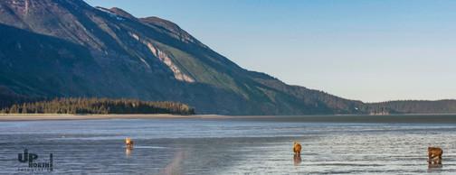 Alaska: Mein Revier, dein Revier
