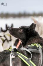 Finnland: I smell snow