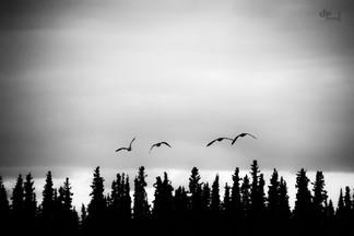 Alaska: Up and away