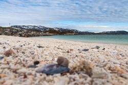 Norwegen: Korallensand