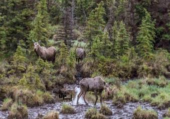 Alaska: 3 auf einen Streich