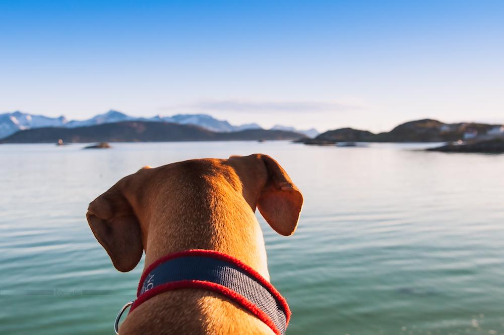 Norwegen: Reisen mit Hund