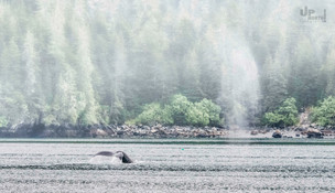 Alaska: Sprühnebel am Morgen