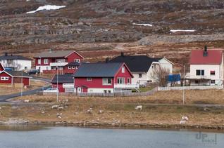 Norwegen: Da steht ein Ren vor der Tür