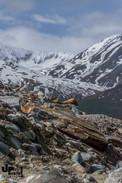 Alaska: Felsbrocken wohin man schaut