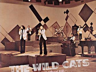 들고양이들 - Wild Cats
