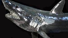 SharkWeek: PADI interviews DiscoShark creator Kevin McHugh