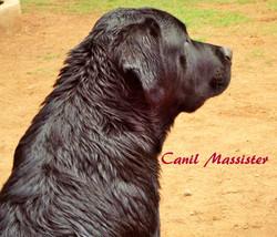 Zeus com 7 meses