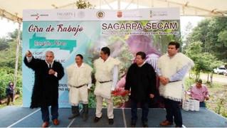 Lanzan en Chiapas Proyecto de Seguridad Alimentaria